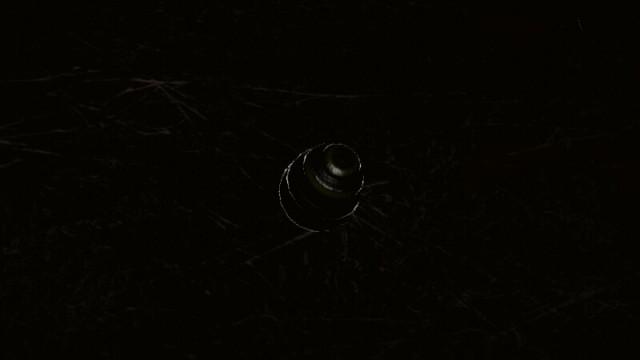 Pikmin spider